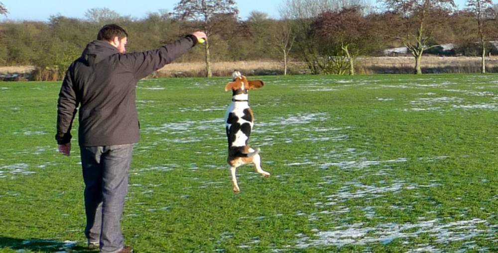 Beagle exercise