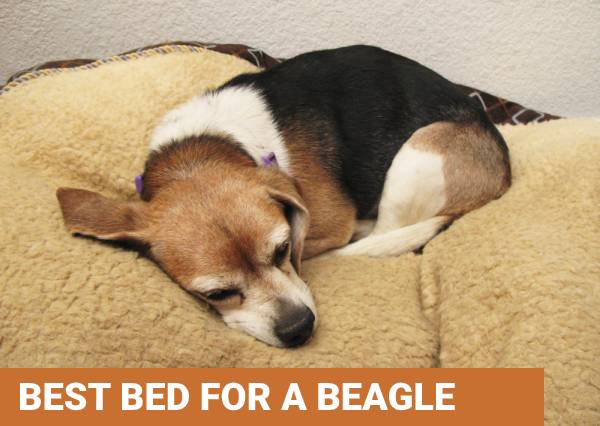 Best beds for beagle