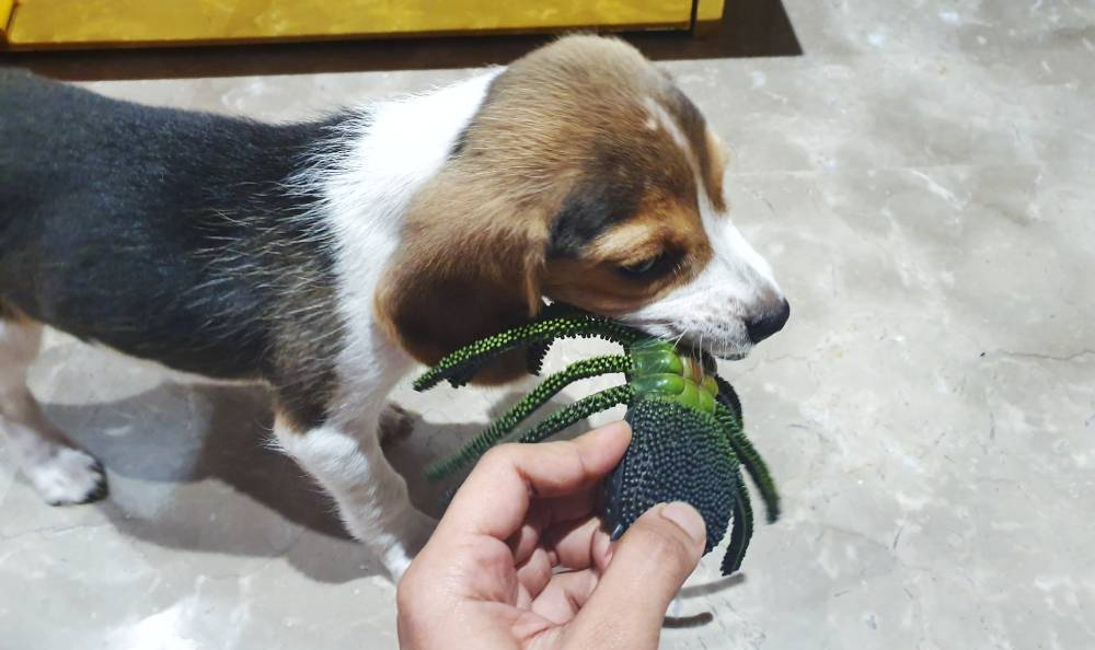 Stop Play biting with redirecting to a toy