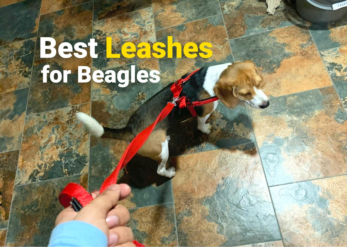 Best leashes for beagles