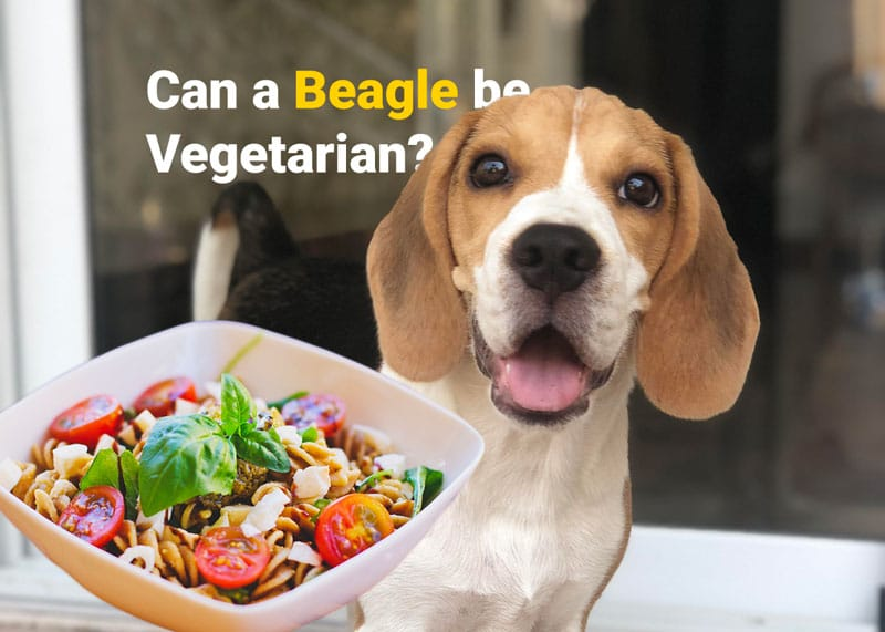 Can a beagle be vegetarian