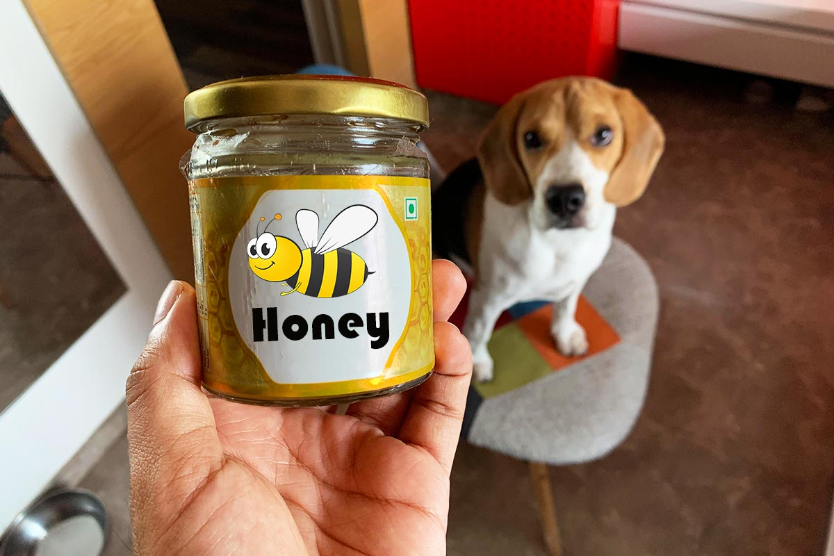 A beagle ready to eat honey