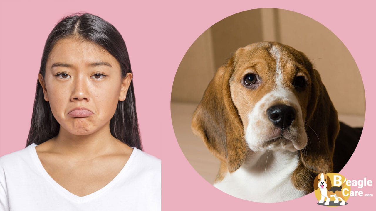Human vs Beagle sad face Comparison