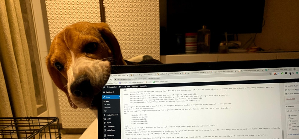 beagle chewing my laptop