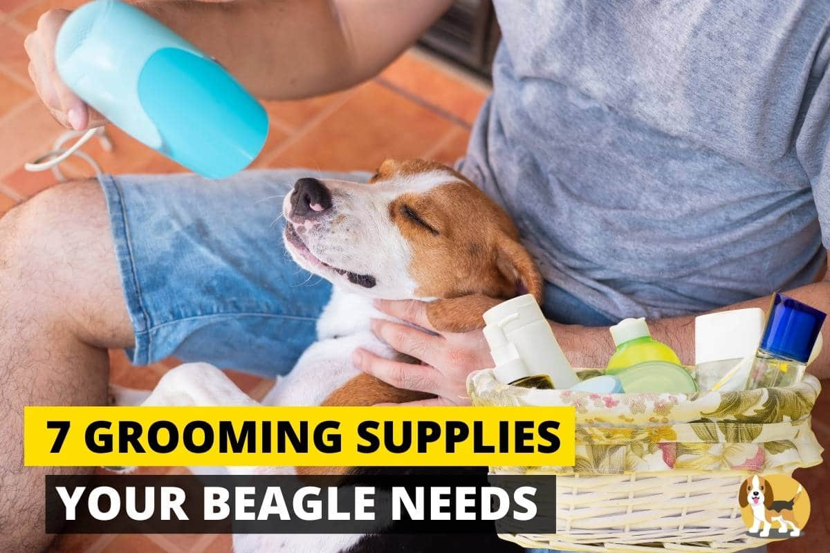 Best Grooming supplies for your beagle