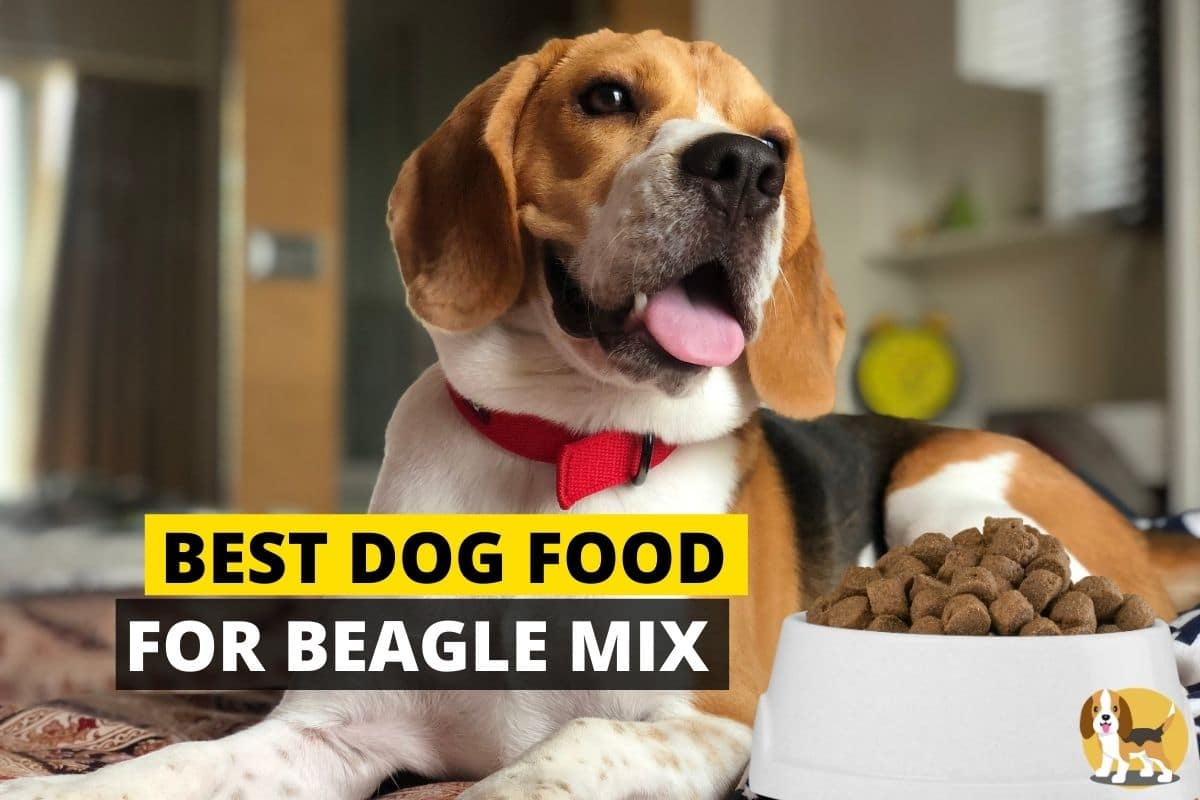 Dog food for beagle Mix