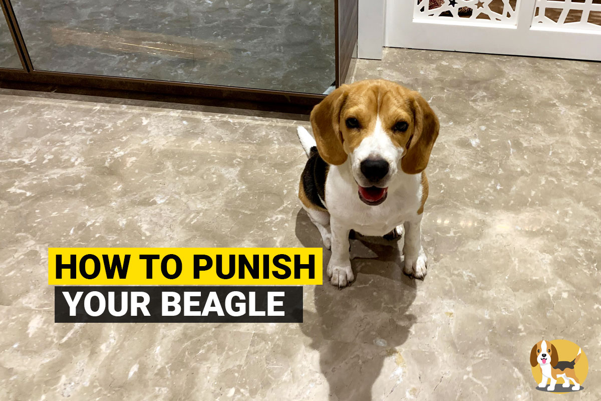 How to punish your beagle