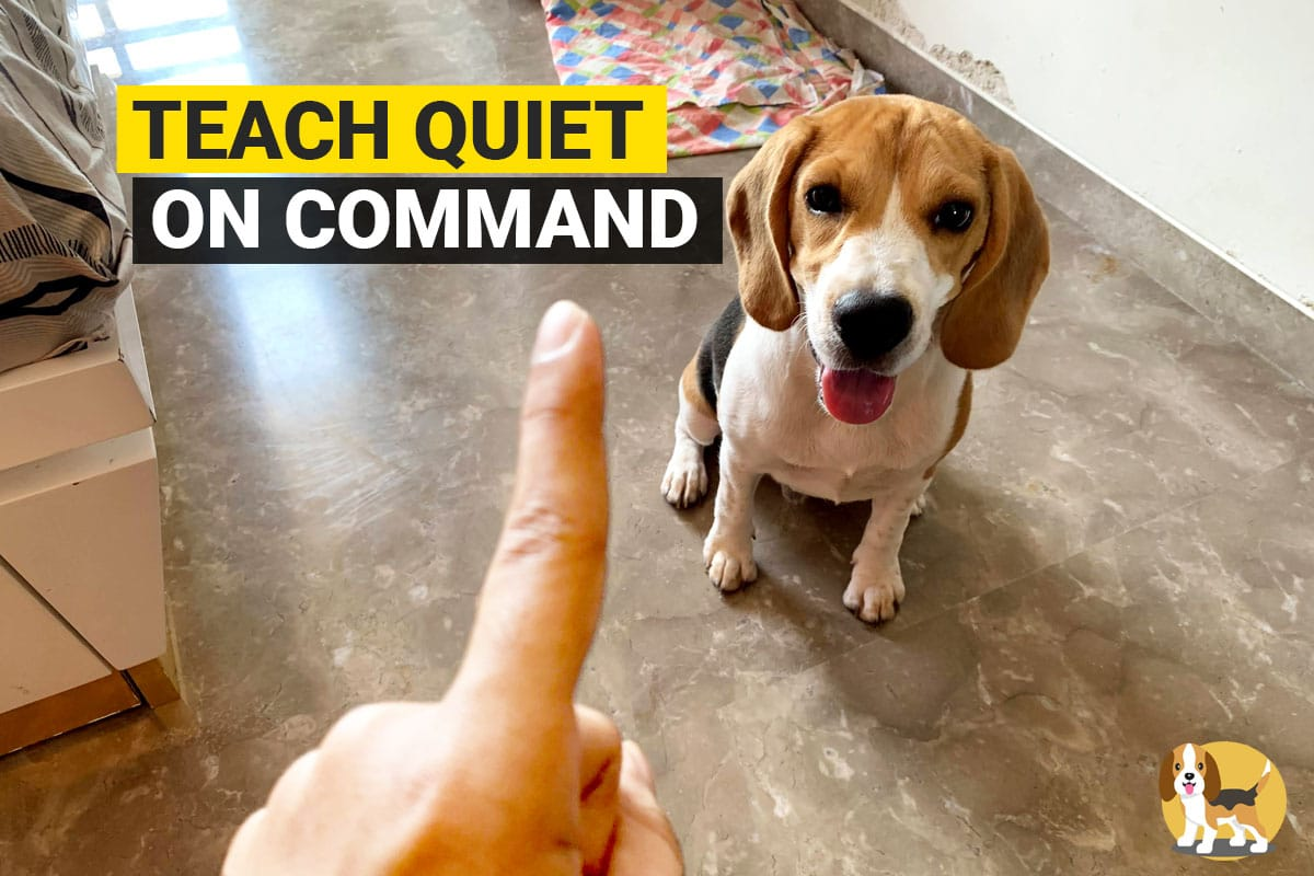 how to teach your beagle quiet on command