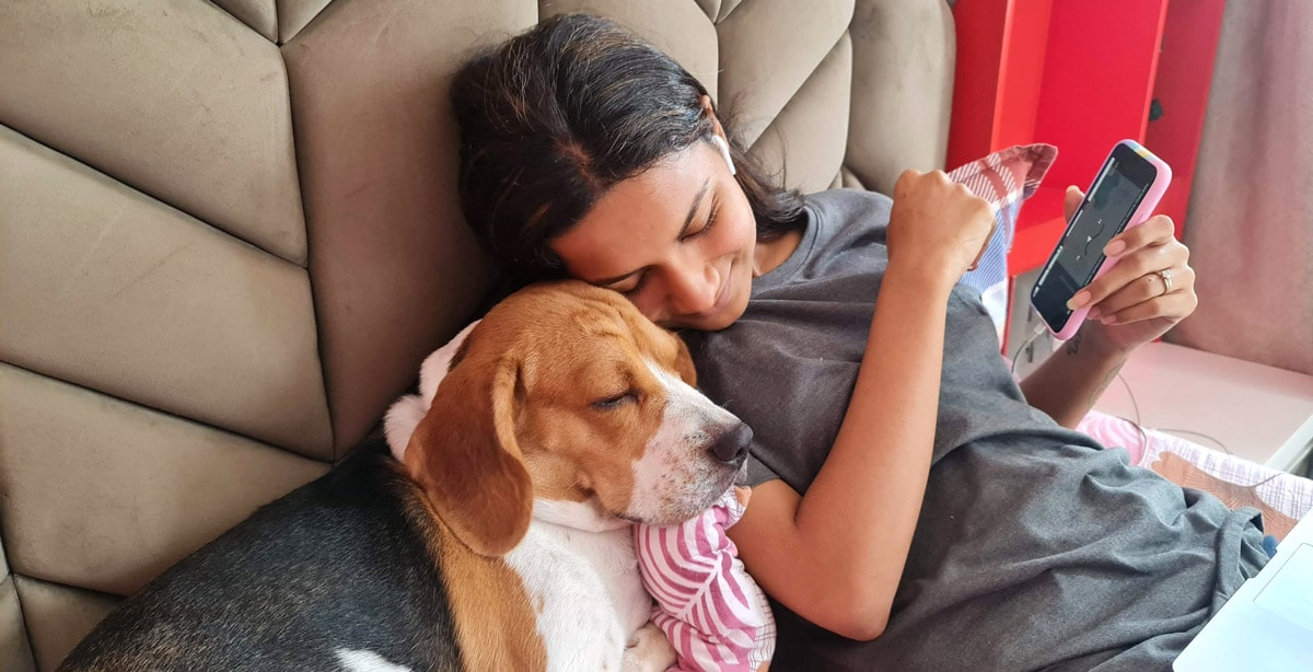 senior beagle puppy love and affectionate