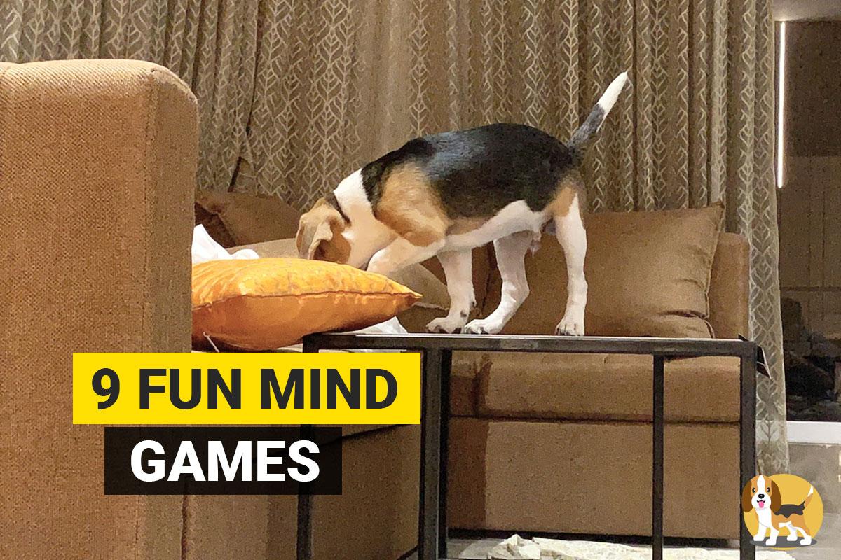 mind games for beagle